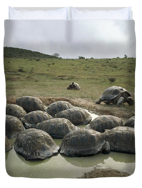 Galapagos Giant Tortoises Wallowing Duvet Cover by Tui De Roy
