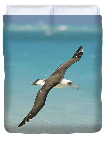 Laysan Albatross Flying Midway Atoll Duvet Cover by Tui De Roy