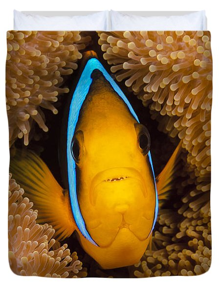 Orange Fin Anemonefish Duvet Cover by Dave Fleetham