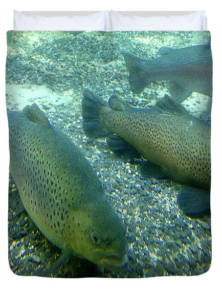 Rainbow trout Duvet Cover by Les Cunliffe