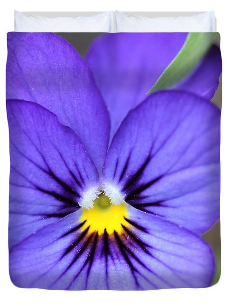 Viola named Sorbet Blue Heaven Jump-Up Duvet Cover by J McCombie