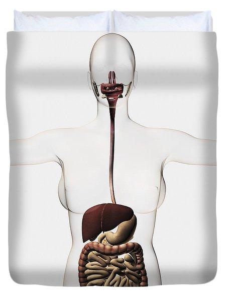 Medical Illustration Of The Human Duvet Cover by Stocktrek Images