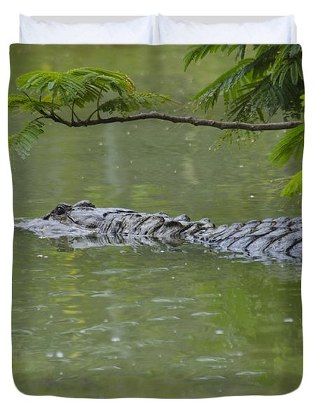 American Alligator Duvet Cover by Mark Newman