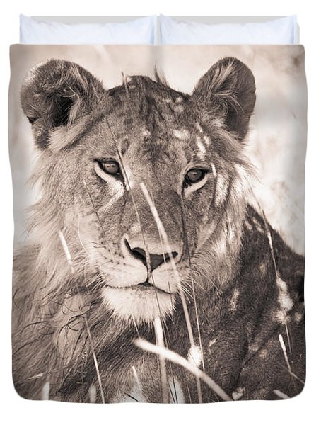 A Lioness Lays In The Shade Kenya Duvet Cover by David DuChemin