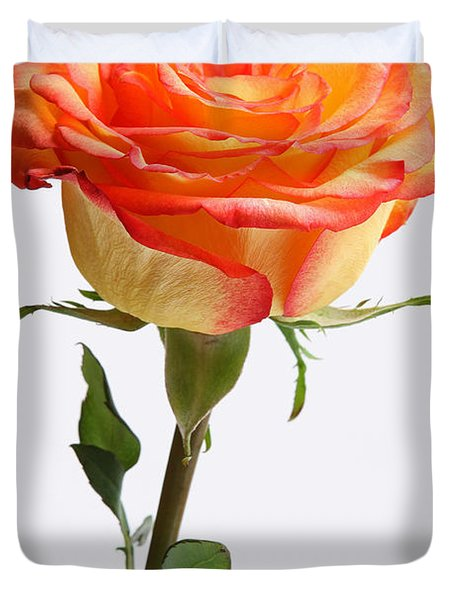 A rose is a rose is a rose Duvet Cover by Juergen Roth