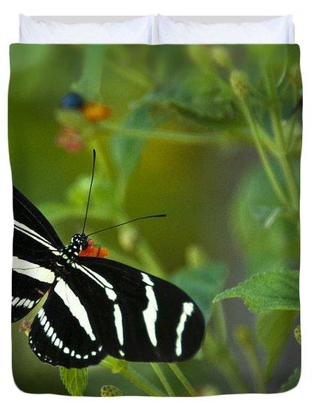A Zebra Longwing Butterfly  Duvet Cover by Saija  Lehtonen