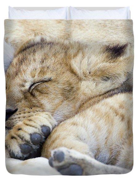 African Lion Cub Sleeping Duvet Cover by Suzi Eszterhas