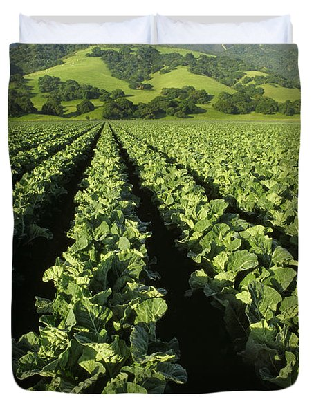 Agriculture - Mid Growth Cauliflower Duvet Cover by Ed Young