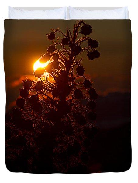 Ahinahina - Silversword - Argyroxiphium Sandwicense - Sunrise On The Summit Haleakala Maui Hawaii  Duvet Cover by Sharon Mau