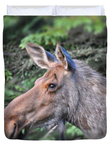 Alaska Moose Duvet Cover by Debra  Miller