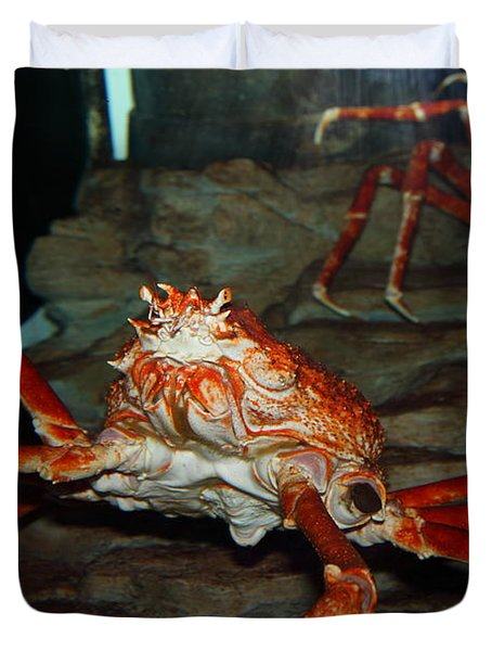 Alaskan King Crab 5D24125 Duvet Cover by Wingsdomain Art and Photography