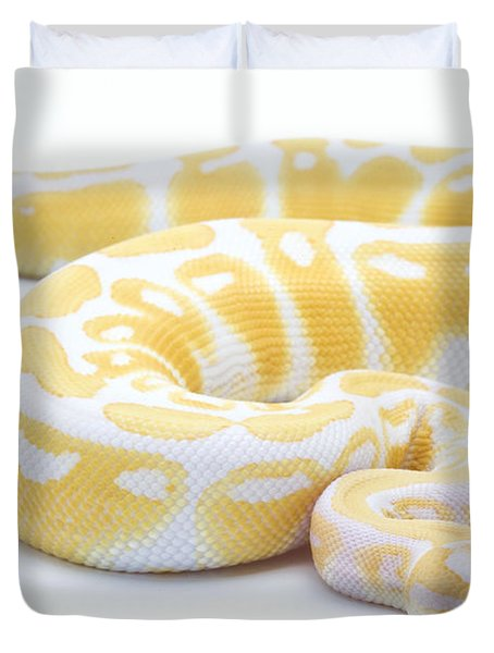 Albino Royal Python Duvet Cover by Michel Gunther