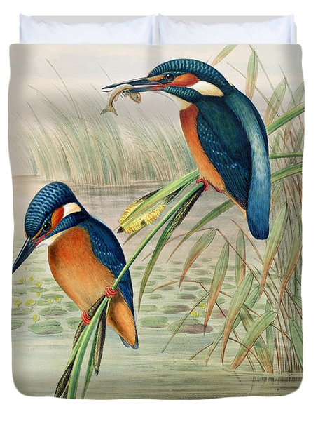 Alcedo Ispida Plate From The Birds Of Great Britain By John Gould Duvet Cover by John Gould William Hart