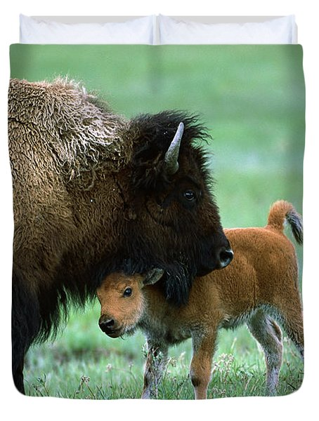 American Bison And Calf Yellowstone Np Duvet Cover by Suzi Eszterhas