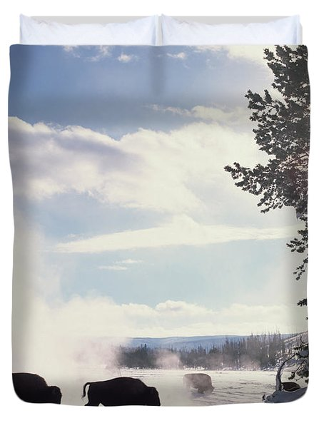 American Bison In Winter Duvet Cover by Tim Fitzharris