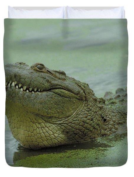 American Crocodile Duvet Cover by Raymond Cramm