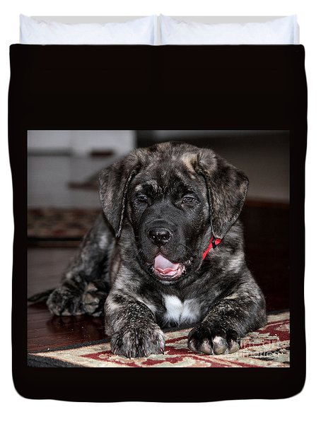 American Mastiff Puppy Duvet Cover by Luv Photography