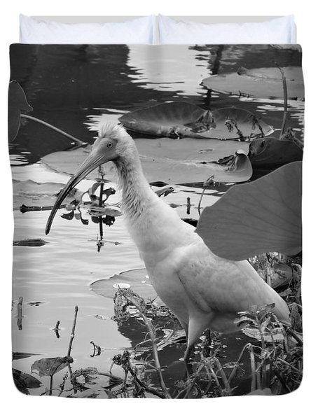 American White Ibis Black And White Duvet Cover by Dan Sproul