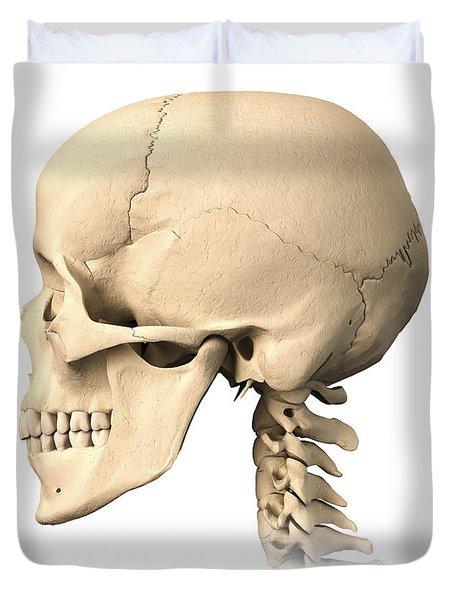 Anatomy Of Human Skull, Side View Duvet Cover by Leonello Calvetti
