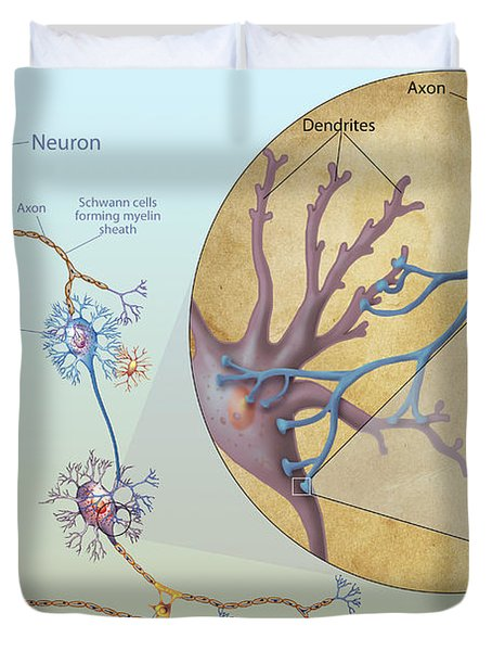 Anatomy Of Neurons Duvet Cover by Carlyn Iverson