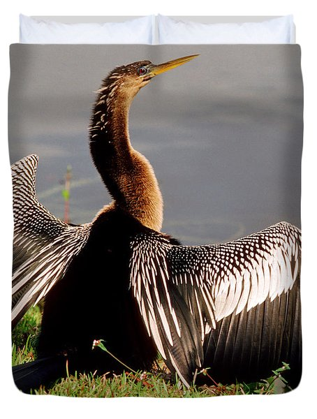 Anhinga Anhinga Anhinga Drying Plumage Duvet Cover by Millard H. Sharp