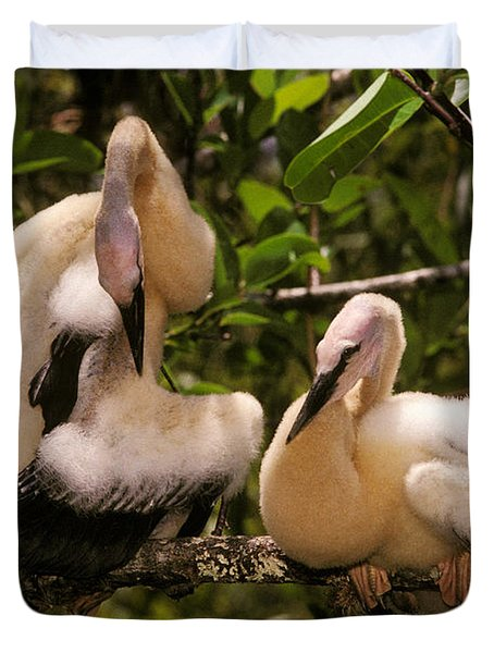 Anhinga Chicks Duvet Cover by Ron Sanford