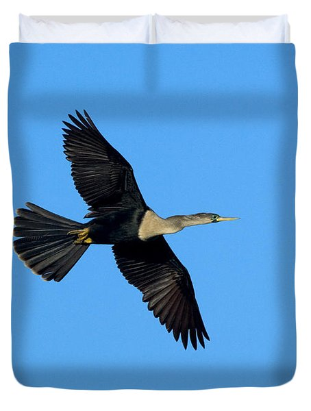 Anhinga Female Flying Duvet Cover by Anthony Mercieca