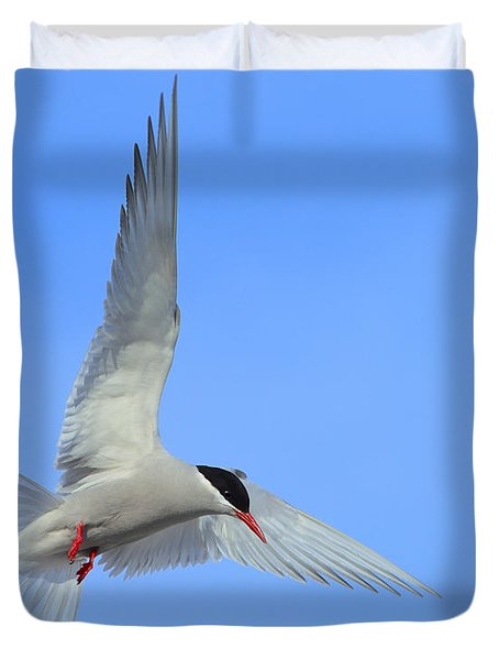 Antarctic Tern Duvet Cover by Tony Beck