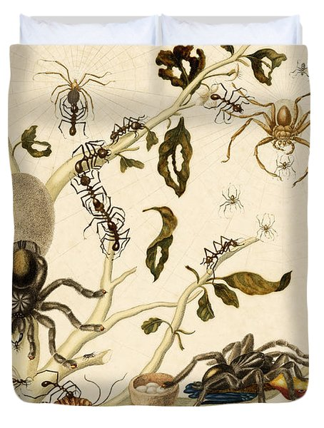 Ants Spiders Tarantula and Hummingbird Duvet Cover by Getty Research Institute