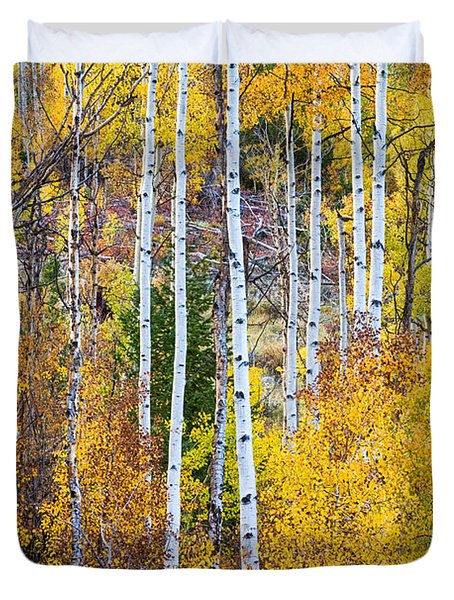 Aspen Tree Magic Duvet Cover by James BO  Insogna