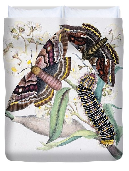 Australian Butterflies Duvet Cover by Philip Ralley