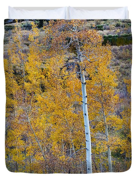 Autumn Aspens Duvet Cover by James BO  Insogna