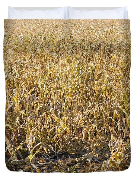 Autumn Cattle Silage Corn In Maine Duvet Cover by Keith Webber Jr