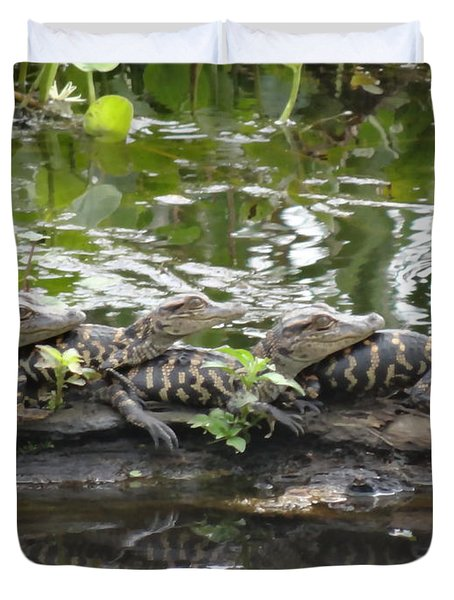 Baby Alligators Duvet Cover by Dan Sproul