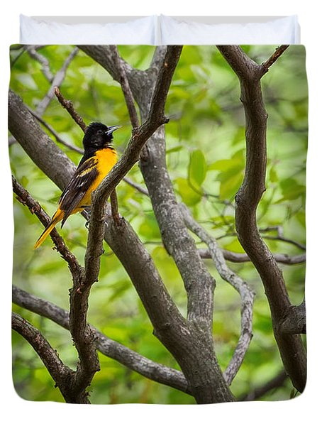 Baltimore Oriole Duvet Cover by Bill Wakeley