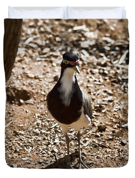 Banded Lapwing Duvet Cover by Douglas Barnard