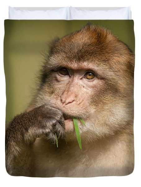Barbary Macaque Duvet Cover by Andy Astbury