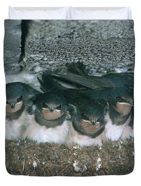 Barn Swallows Duvet Cover by Hans Reinhard