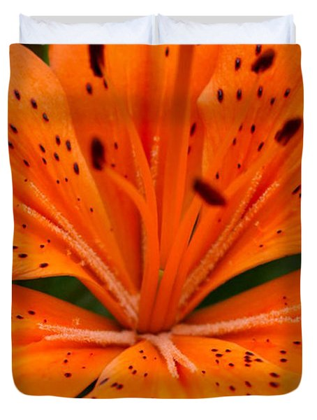 Beautiful lily Duvet Cover by Carol Lynch