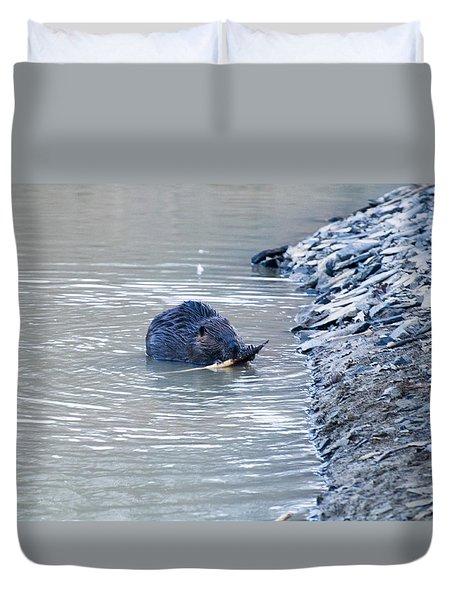 Beaver Chews On Stick Duvet Cover by Chris Flees