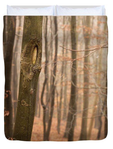 Beech Wood In Autumn Duvet Cover by Anne Gilbert