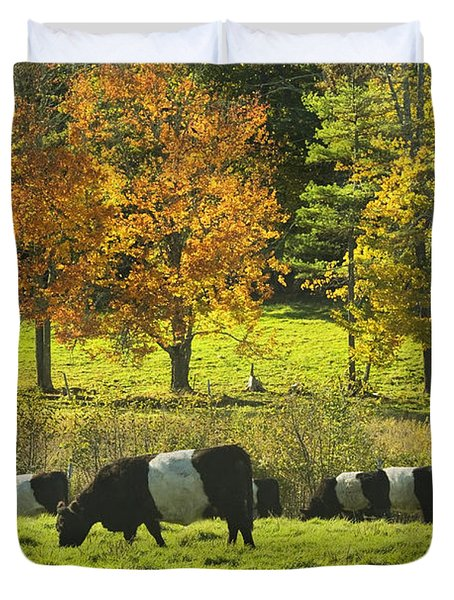Belted Galloway Cows Grazing On Grass In Rockport Farm Fall Maine Photograph Duvet Cover by Keith Webber Jr