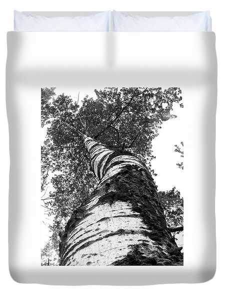 Birch Tree Duvet Cover by Tim Buisman