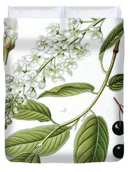 Bird Cherry Cerasus Padus Or Prunus Padus Duvet Cover by Anonymous