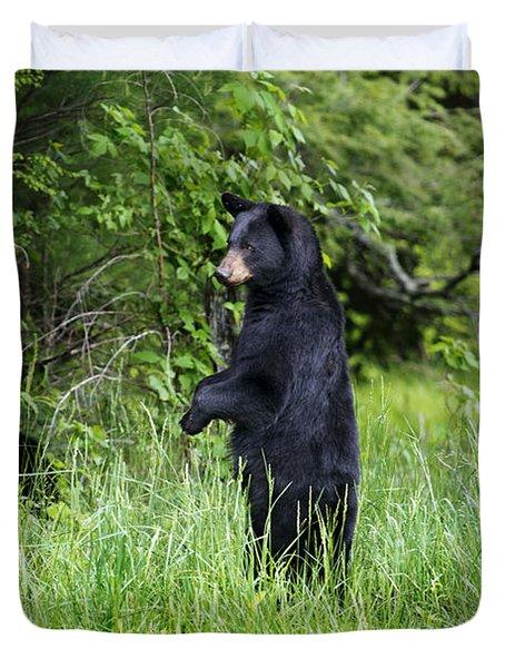 Black Bear Standing Upright Looking Duvet Cover by Dan Friend