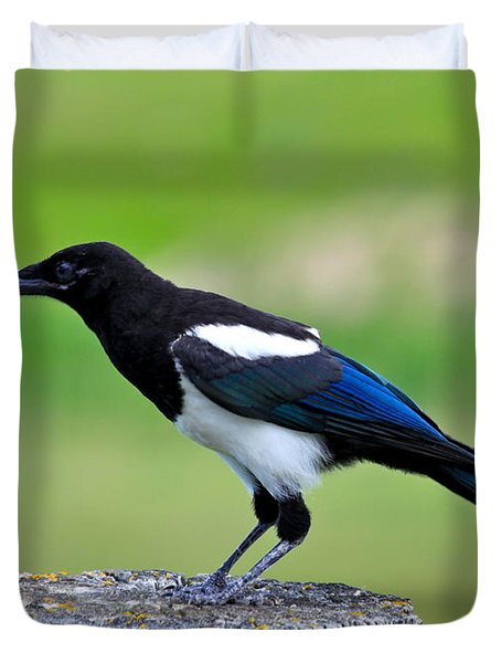 Black Billed Magpie Duvet Cover by Karon Melillo DeVega