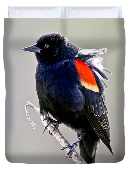 Black Bird Duvet Cover by Athena Mckinzie