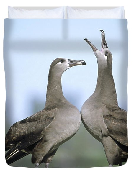 Black-footed Albatross Courtship Dance Duvet Cover by Tui De Roy