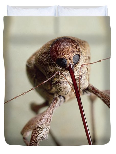 Black Oak Acorn Weevil Boring Into Acorn Duvet Cover by Mark Moffett