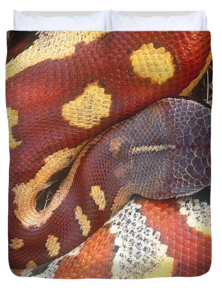 Blood Python Duvet Cover by Art Wolfe